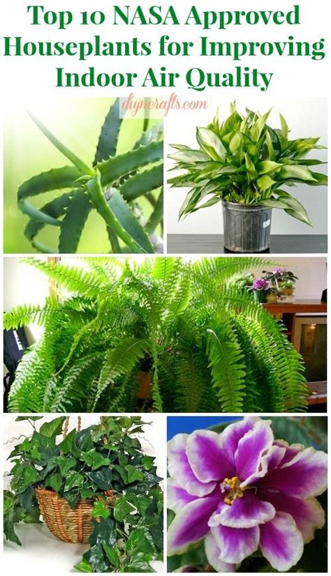 best houseplants for air quality indoor air quality houseplant and nasa on pinterest