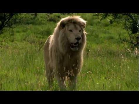 white lion film italiano white lion movie trailer youtube