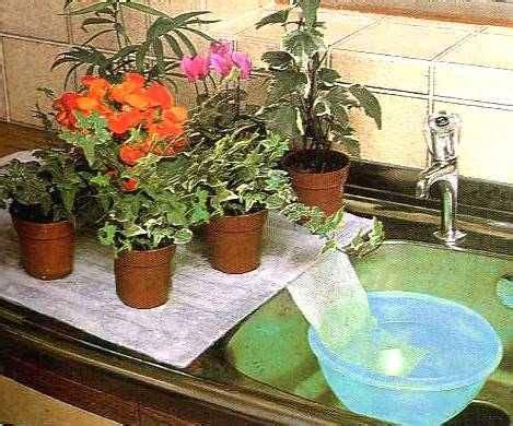 innaffiare fiori vacanza i migliori metodi per annaffiare le piante quando partite