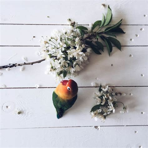 best lifestyle instagram 8 still life iphone photographers to follow on instagram