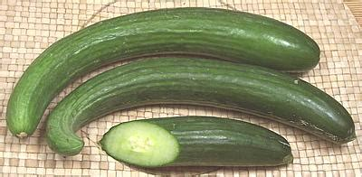hot house cucumbers european english cucumber