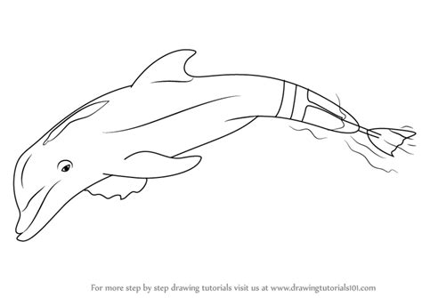 coloring pages of winter and hope learn how to draw winter the dolphin marine mammals step