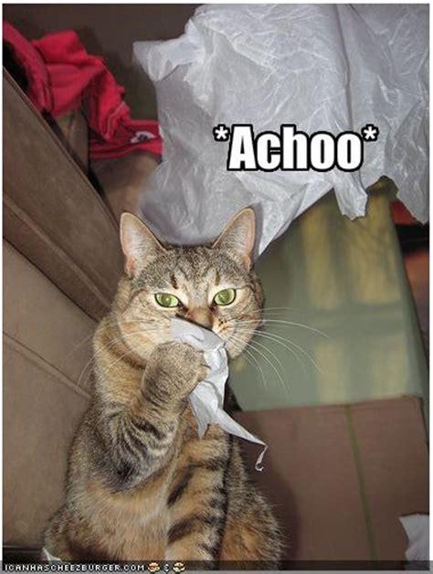 sneeze treatment feline calicivirus not your common cold the conscious cat