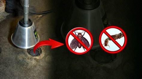 getting rid of bathroom flies how to get rid of drain flies