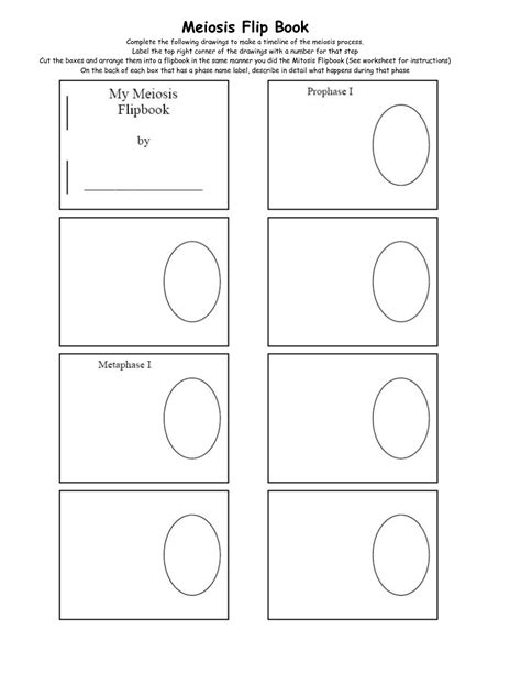 flip book template mitosis worksheet answers worksheet printables site