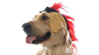 Dog Punk Dog Youtube