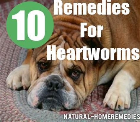 heartworms remedies how to treat heartworm in