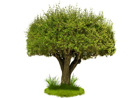 tree image green tree png image pngimagesfree