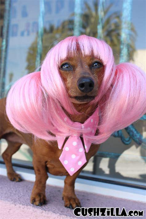 pink dogs wig cat wig cushzilla pink anime pet wig
