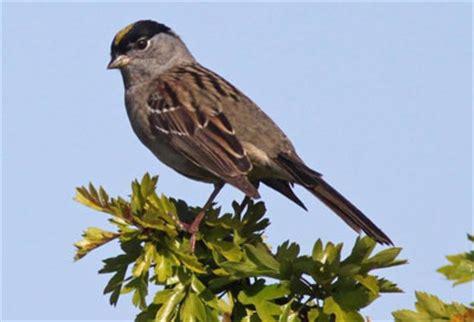 study ids key birds that host lyme disease bacteria in