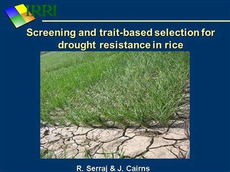 drought resistance definition drought serraj authorstream