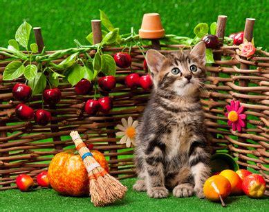 come alimentare un gatto l apparato digerente gatto