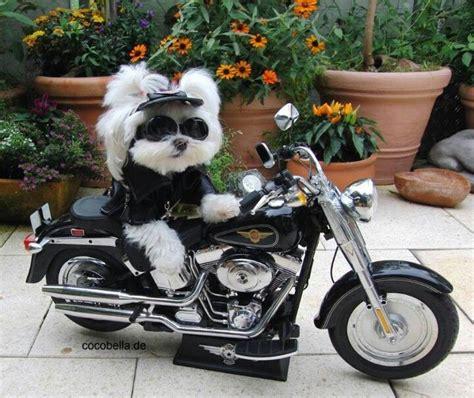 Motorrad B Rger D Sseldorf by 104 Best Images About Biker Dogs On Best