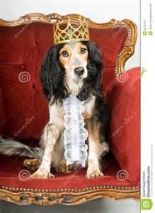 Dogs On Sofa King Dog Stock Image Image 25797421
