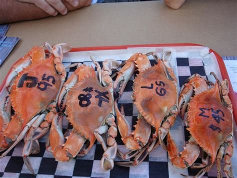 captain james crab house different sizes and prices picture of captain james crabhouse restaurant