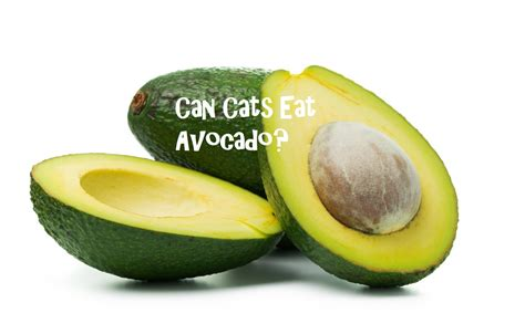 are avocados bad for dogs avocado bad for cats cats