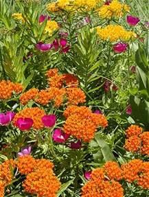 Flowers For Butterfly Garden Butterfly Gardening