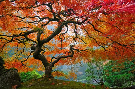 pretty trees the 14 world s most beautiful trees mostbeautifulthings