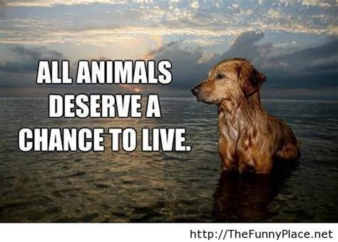quotes about animals 89 best images about animal quotes on wolves