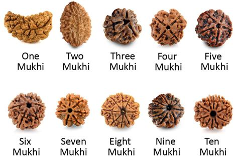 rudraksha meaning and mukhi types different types of rudraksha beads and their benefits