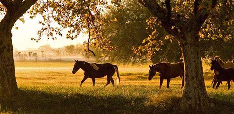imagenes bonitas y paisajes imagenes bonitas de paisajes naturales en verano