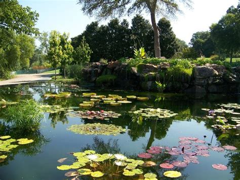Hotels Near Dallas Arboretum Botanical Gardens Spitting Frog Water Feature Picture Of Dallas Arboretum Botanical Gardens Dallas Tripadvisor