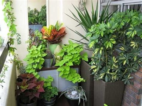 indoor plants ideas 15 gorgeous phyto design ideas and indoor plants for