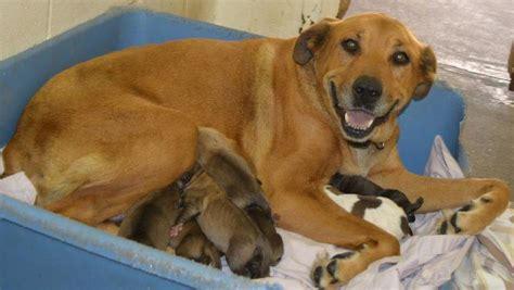animales foyando a viejas fotos de perros cojiendo fotos de perros cojiendo mama