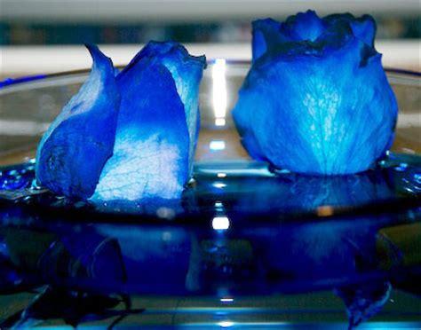 imagenes de rosas moradas y azules cosillas rosas azules
