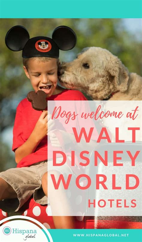 dogs at disney world dogs now welcome at select walt disney world hotels hispana global