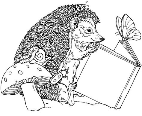hedgehog coloring pages hedgehog coloring pages kidsuki