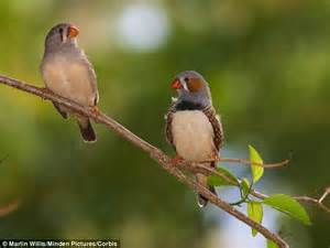finches choose partners in a similar way to humans daily