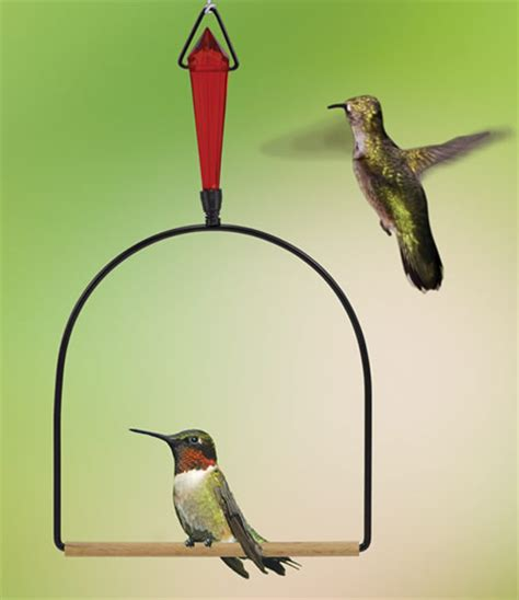 the bird perched on the swing duncraft com jeweled hummingbird swing
