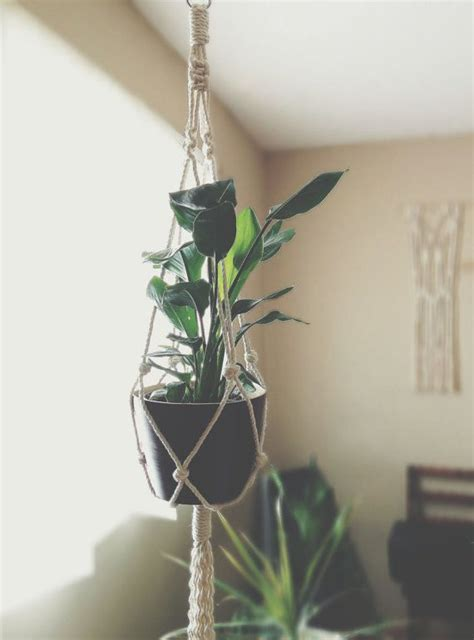 plant wall hangers indoor best 25 indoor plant hangers ideas on macrame