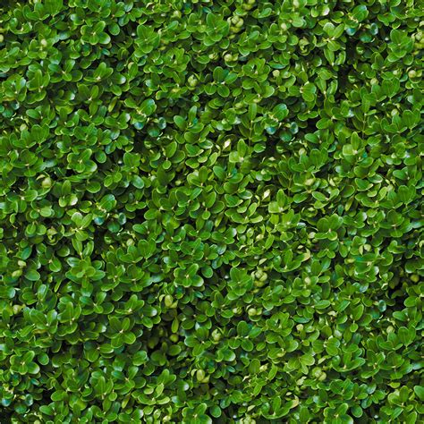 pattern photoshop vegetation hedge seamless texture pack vegetation hedge 30 png