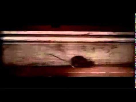 nolans cheddar mouse commercial nolan s cheddar commercial mouse doovi