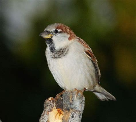 171 best images about birds of kentucky on pinterest