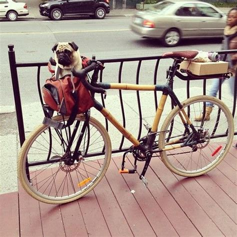 pug bike 22 best images about we pugs on puppys the and pug