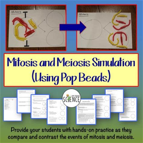 lab bench mitosis and meiosis mitosis lab activity and worksheets resultinfos
