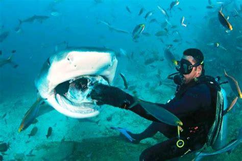 dive dive dive world nomad travel insurance review scuba diving reviews