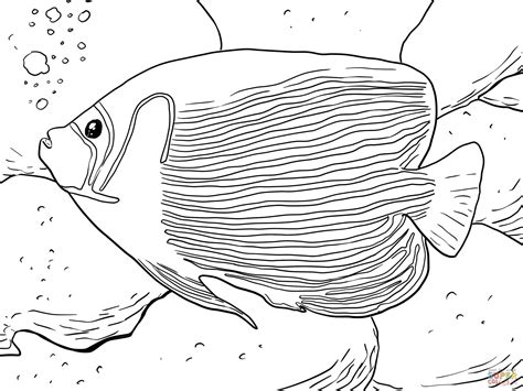 angel fish coloring pages printable angel fish coloring page vitlt com