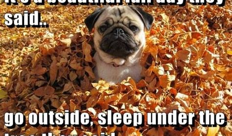 Autumn Meme - 7 funny fall memes to share on facebook that celebrate the
