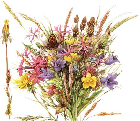 significato dei fiori amicizia mondo bucaneve