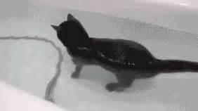 cat swimming in bathtub cat casually swimming around its bath tub pool