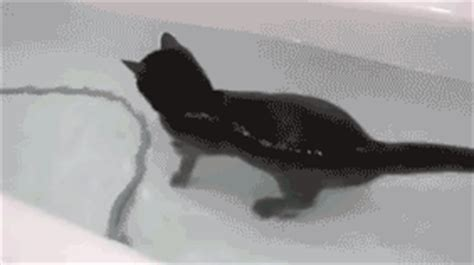 cat casually swimming around its bath tub pool