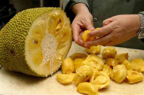 protein jackfruit 12 benefits of jackfruit and seeds for healthy