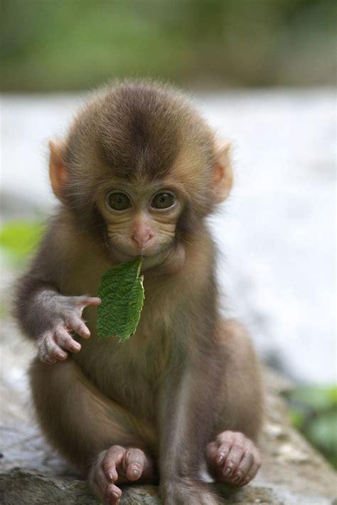 Monkey munchies.