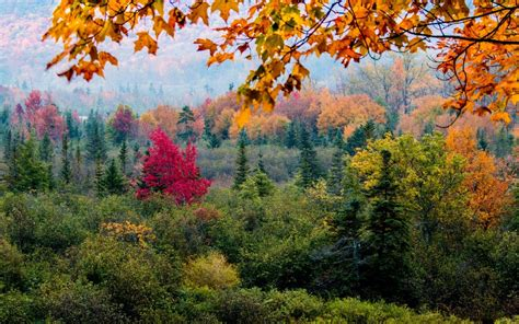 colorful hill nature trees forest leaves fall branch pine trees