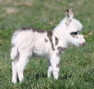 How Do Blind People Sleep Saturday S Aww A Baby Miniature Donkey Viralspell