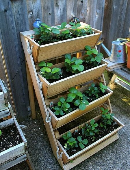 how to plant strawberries in a raised bed all about home growing strawberries www coolgarden me